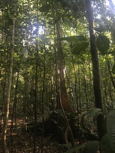 Parc Tangkoko