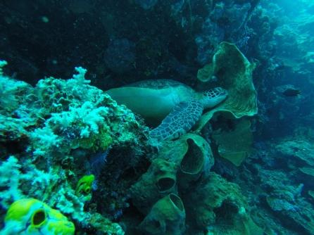 Bunaken plongée